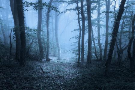 Mysteus 暗い古い森霧。クリミア半島の春の朝。幻想的な雰囲気。美しい自然の風景。ビンテージ スタイル