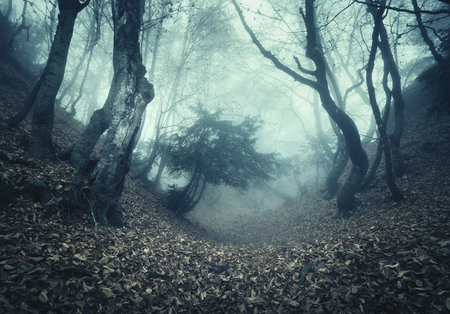 Mysterious dark old forest in fog. Autumn morning in Crimea. Magical atmosphere. Beautiful natural landscape. Vintage style 免版税图像