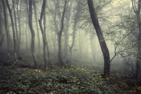 spring season: Mysterious dark old forest in fog with flowers. Spring morning in Crimea. Magical atmosphere. Beautiful natural landscape. Vintage style