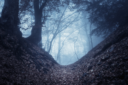 spooky: Mysterious dark old forest in fog. Autumn morning in Crimea. Magical atmosphere. Beautiful natural landscape. Vintage style Stock Photo