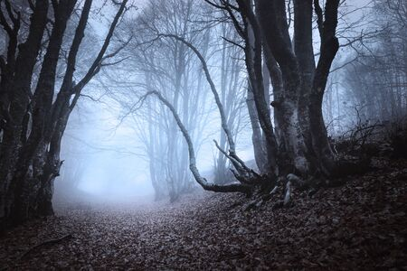 Mysterious dark old forest in fog. Autumn morning in Crimea. Magical atmosphere. Beautiful natural landscape. Vintage style Stock Photo