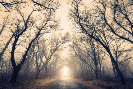Mysterious dark old forest in fog with road. Autumn morning. Magical atmosphere. Beautiful natural landscape. Vintage style
