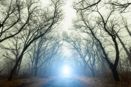 De weg loopt door eng geheimzinnig bos met blauw licht in de mist in de herfst. Magic bomen. Natuur mistige landschap Stockfoto