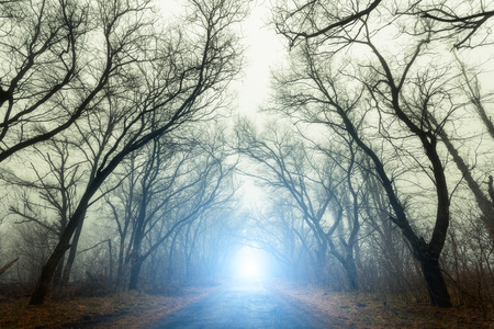 mystery: The road passing through scary mysterious forest with blue light in fog in autumn. Magic trees. Nature misty landscape