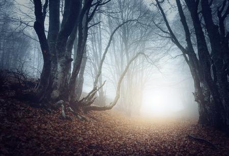 Straszny tajemniczy las we mgle jesienią. Magiczne drzewa. Natura mglisty krajobraz