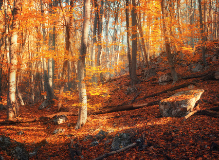 res: Colorful autumn landscape with trees and orange and res leaves. Mountain forest at sunset in Crimea. Nature background Stock Photo