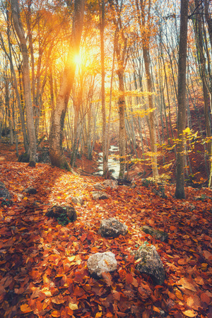 Colorful autumn landscape with trees and orange and res leaves. Mountain forest at sunset in Crimea. Nature background Stock Photo