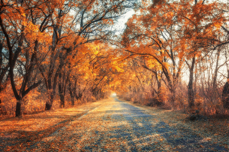 Autumn forest. Forest with country road at sunset. Colorful landscape with trees, rural road, orange leaves and blue sky. Travel. Autumn background. Magic forest 免版税图像