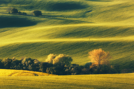 Blooming trees against fields at sunset in spring in South Moravia, Czech Republic. Colorful landscape with fields with green grass and trees. Waves hills, rolling. Nature background. Agriculture