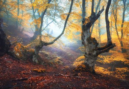 120x80cm Wald Bäume Blätter Nebel Herbst