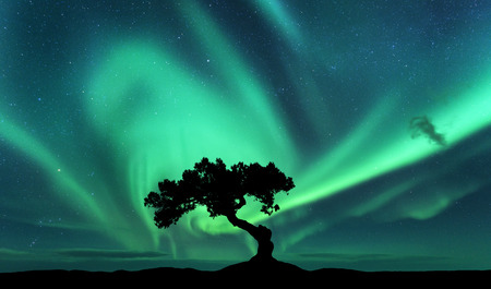 Aurora borealis and silhouette of a tree on the hill. Aurora. Green northern lights. Sky with stars and polar lights. Night landscape with bright aurora, tree, dark sky. Nature background. Concept Archivio Fotografico