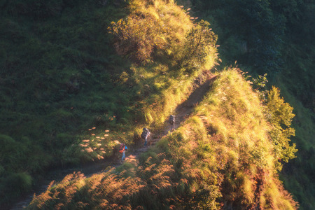 Nepalese men with bags walking on the mountain with yellow grass and trees in bright summer evening in Nepal. Landscape with porters with luggage in the hill with forest at sunset. People and nature