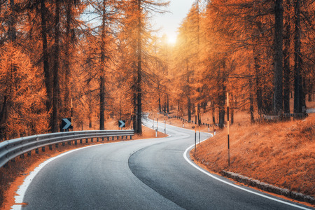 Road in autumn forest at sunset. Beautiful winding mountain road, trees with red foliage and orange sunlight. Landscape with empty asphalt roadway through woodland in fall. Transportation. Seasonal