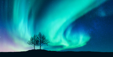 Aurora borealis and silhouette of the trees on the hill. Aurora. Northern lights. Sky with stars and green polar lights. Night landscape with bright aurora, tree, starry sky. Space background. Concept Фото со стока