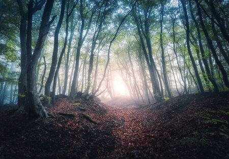Prachtig mystiek bos in mist bij zonsopgang in de herfst. Kleurrijk landschap met betoverde bomen met oranje en rode bladeren. Landschap met pad in dromerig mistig bos. Herfstkleuren in oktober. Natuur Stockfoto