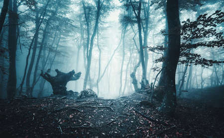 Mystical dark autumn forest with trail in blue fog. Landscape with enchanted trees with orange leaves on the branches. Scenery with path in dreamy old foggy forest. Fall colors. Nature. Vintage toning Stock fotó - 155412628