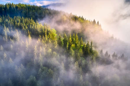 Mountains in clouds at sunrise in summer. Aerial view of mountain slopes with green trees in fog. Beautiful landscape with hills and foggy forest. Top view from drone of mountain woods in low clouds 免版税图像