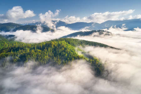 Mountains in clouds at sunrise in summer. Aerial view of mountain peak with green trees in fog. Beautiful landscape with high rocks, forest, sky. Top view from drone of mountain valley in low clouds 免版税图像