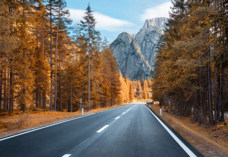 Road in autumn forest at sunset in Italy. Beautiful mountain roadway, trees with orange foliage and sunlight. Landscape with empty asphalt road through woodland, blue sky, high rocks in fall. Travel