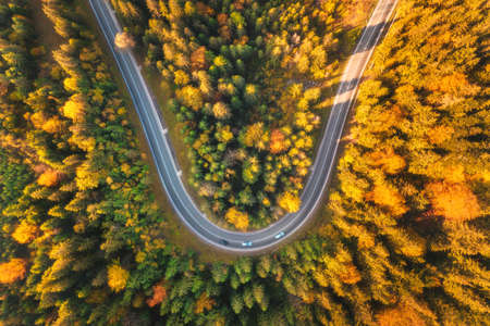 Aerial view of mountain road in beautiful forest at sunset in autumn. Top view from drone of winding road in woods. Colorful landscape with curved roadway, pine trees, orange leaves in fall. Travel