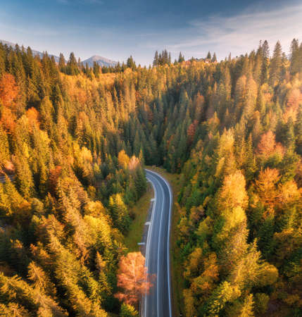 Aerial view of mountain road in beautiful forest at sunset in autumn. Top view from drone of winding road in woods. Colorful landscape with empty roadway, trees with orange leaves, blue sky in fall