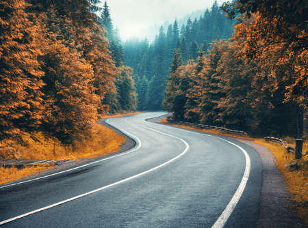 Road in autumn foggy forest in rainy day. Beautiful mountain roadway, trees with orange foliage in fog and overcast sky. Landscape with empty asphalt road through woodland in fall. Travel. Road trip 免版税图像