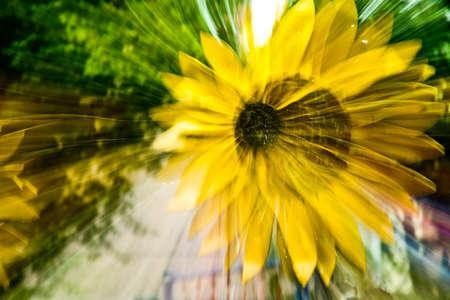 one dynamic sun flower Stok Fotoğraf