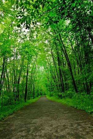 hemlock: Camino por el bosque lluvioso templado. Atlántico, Quebec, Ville Laurainne bosques Foto de archivo