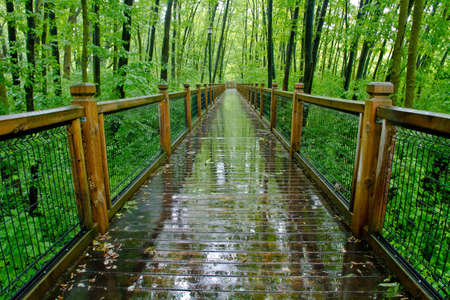 temperate: Path through temperate rain forest. Atlantic, Quebec, Ville Laurainne