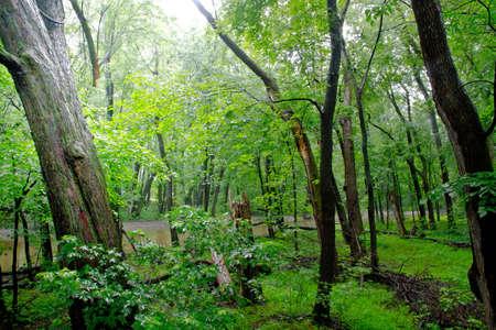ville: Path through temperate rain forest. Atlantic, Quebec, Ville Laurainne