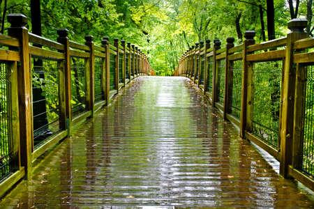 hemlock: Path through temperate rain forest. Atlantic, Quebec, Ville Laurainne