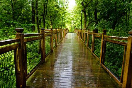 Path through temperate rain forest. Atlantic, Quebec, Ville Laurainne photo