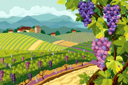 Rural landscape with vineyard and grapes bunches Ilustração