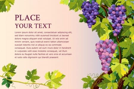 Vector achtergrond met druiven trossen en met plaats voor uw tekst