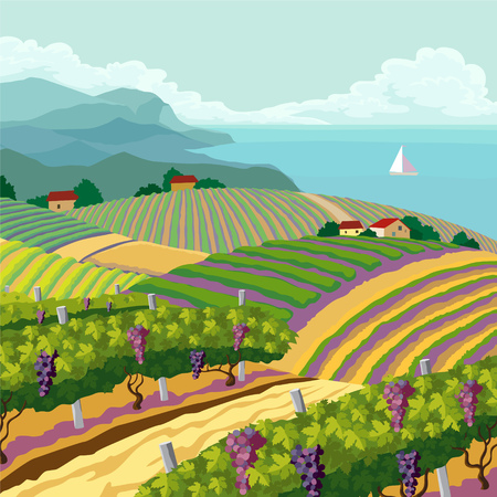 grape field: Rural landscape with vineyard and mountain and sea panoram Illustration