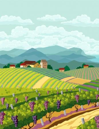 ブドウ畑と山の panoram と農村風景