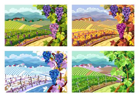 Krajobrazu wiejskiego z winnic i winogron pęczki. Cztery sezon.