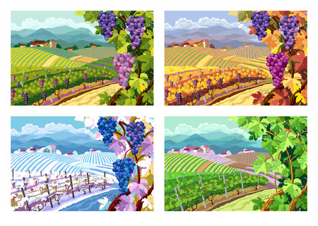 Rural landscape with vineyard and grapes bunches. Four season. Vectores