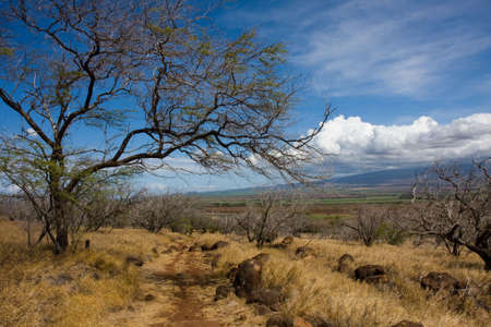 Hiking on the lahaina pali trail, Maui, Hawaii, under a bright sunny day. View of the Haleakala Volcano in the background.
