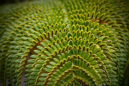 Closeup of a green tropical fern Stock Photo - 7142344