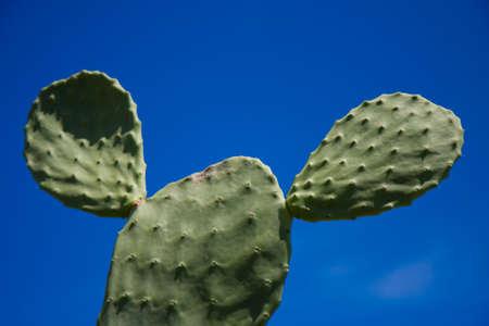 A green cactus on a perfect blue sky, Oahu, Hawaii 版權商用圖片