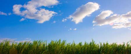 Blue sky with some clouds over a Sugar Cane field -Maui, Hawaii 版權商用圖片