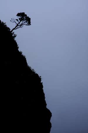A single tree is growing on the steep hillside of the Haleakala Volcano Crater. Maui, Hawaii.