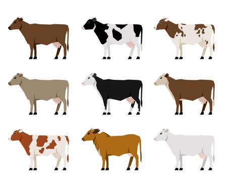 Melk koeien platte pictogrammen. Meest populair vee. Stock Illustratie