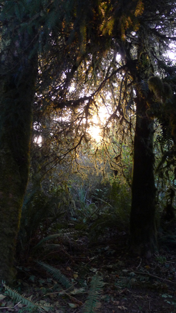 glows: Enchanted forest of faerie glows and paths into wilderness. Stock Photo