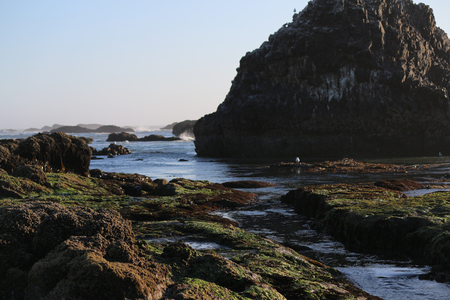 the oceans: Beautiful Oregon Coasts Pacific Oceans ecosystem showing important tide pools, rock formations and living land masses.