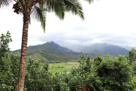 Cloud-covered mountains in Hawaii with palm trees