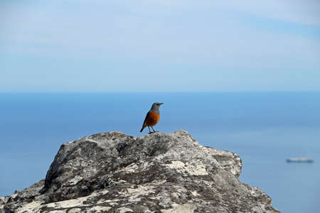 little bird on a rock on Table Mountain in Cape Town South Africa nature