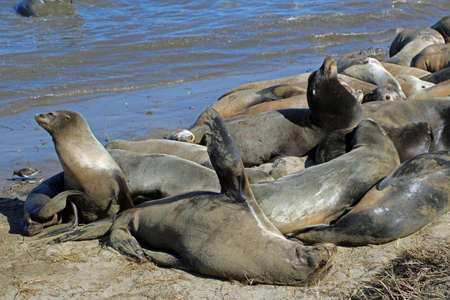Sea lion colony near Moss Landing in California 스톡 콘텐츠