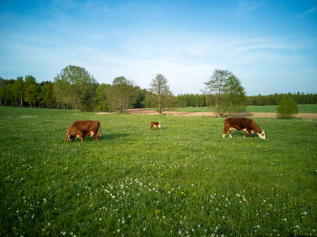 No mass animal husbandry, nature conservation, dairy cows with calves